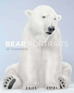 Bear Portraits